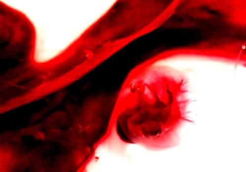 sangre de menstruacion